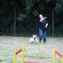 Hundetraining2